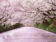 Парк в Хиросаки