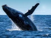 bitcoin-price-whale