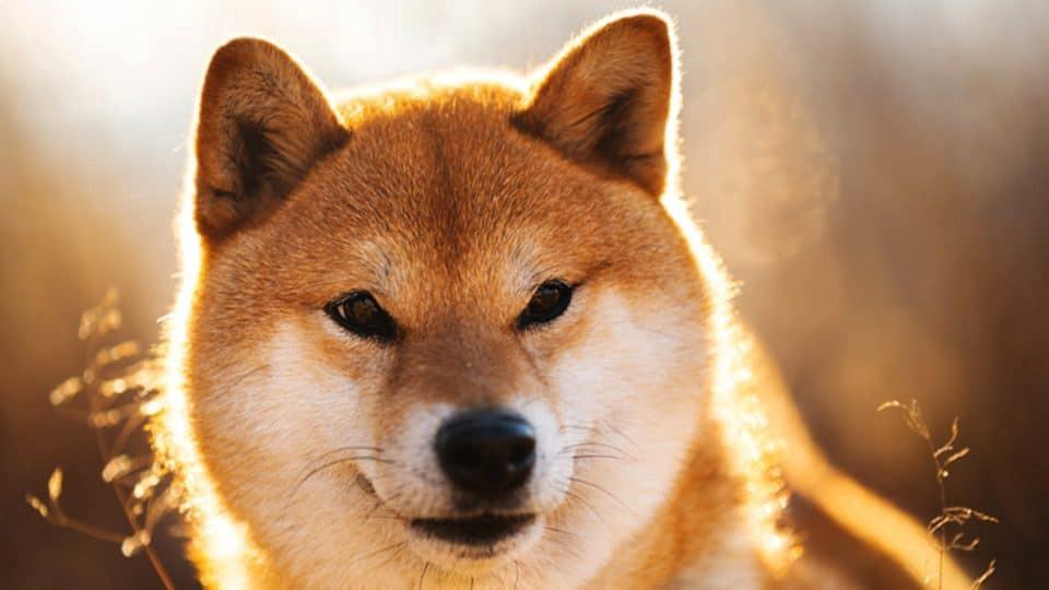 Shiba Inu обошла популярные криптовалюты по капитализации